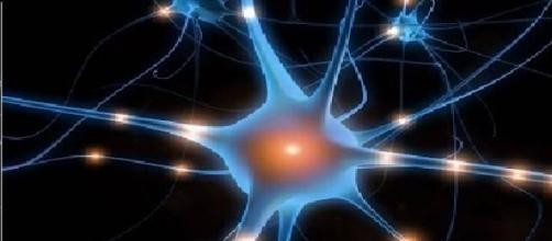 Cellule nervose: i neuroni