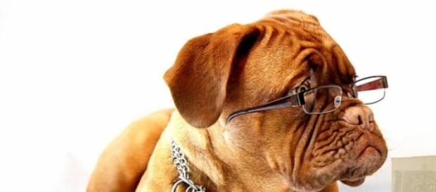 Secretaria da Saúde seleciona veterinário