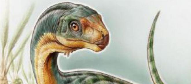 El Chilesaurus Diegosuarez