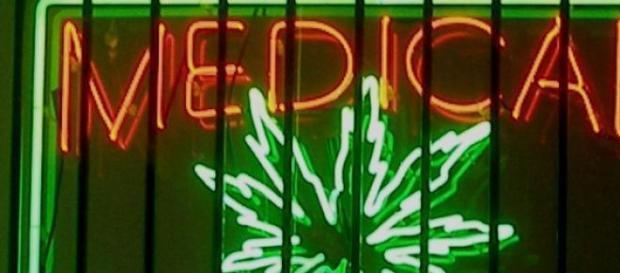 Marihuana terapéutica y su autoabastecimiento