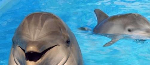 Fica na gaveta da SIC programa com os golfinhos.