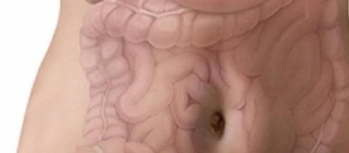 Intestino: principal orgão do sistema imunitário