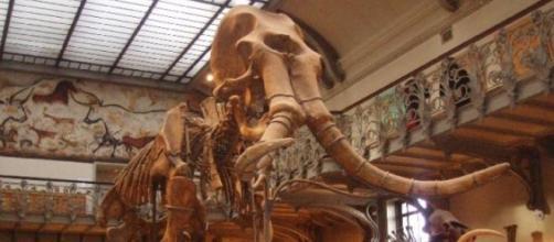 Se pudieron insertar genes de mamut en un elefante