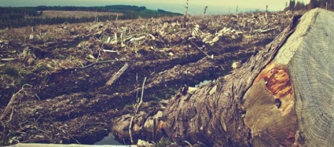 O desmatamento ainda é tabu a ser quebrado no país brasileiro. Esse problema é extremamente prejudicial ao nosso meio ambiente podendo trazer terríveis efeitos negativos para a sociedade. Destruir a natureza não é nada bom.