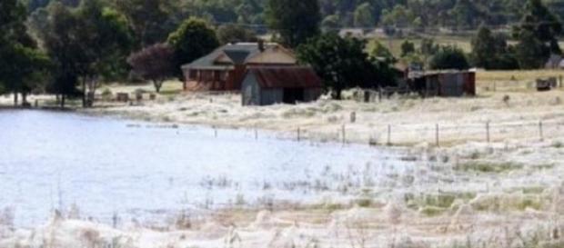 Un sat întreg acoperit cu pânză de păianjen