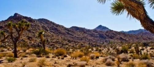 Dianna Bedwell sobreviveu duas semanas no deserto.