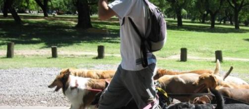 Dog-sitter, da part-time a lavoro a tempo pieno