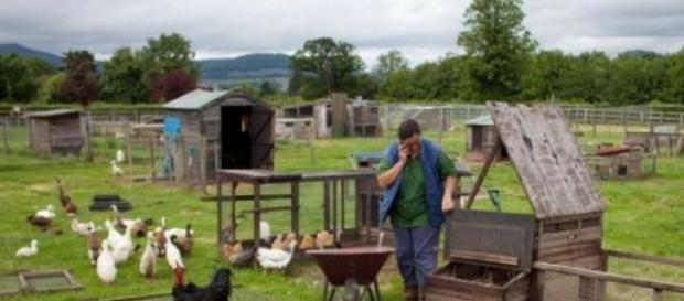 Instalarea la ţară a tinerilor fermieri