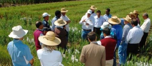 Agricultores reunidos en un campo de cultivo
