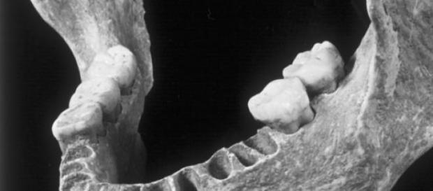 Mandibula primului Homo Sapiens european