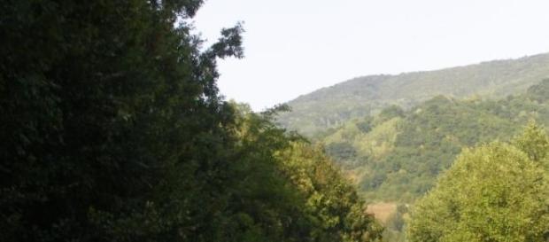 Pădurile sunt aurul verde al României