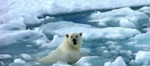 Cambio climático afectaría biodiversidad global