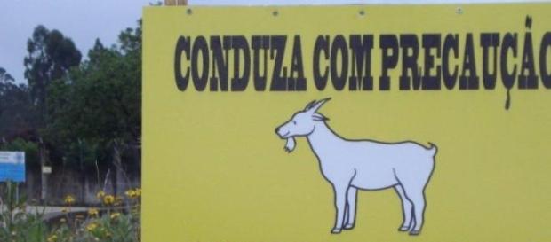 """""""Caminho de cabras"""" indica uma das placas"""