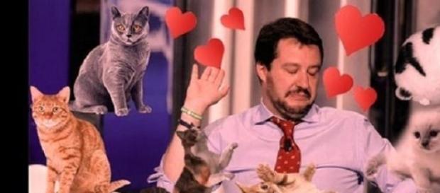 'Gattini su Salvini', flash mob su Facebook
