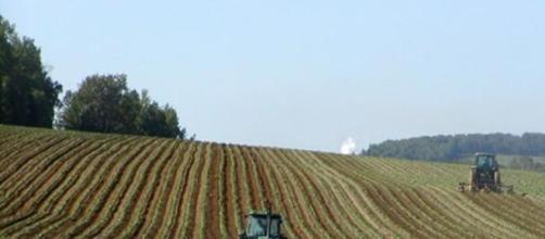 Sì a finanziamenti per neo imprenditori agricoli
