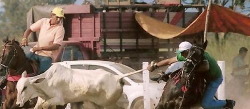 Vai vaqueiro, Valeu  boi!
