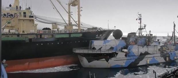 Sea Shepherd collides with JICR Research Vessel