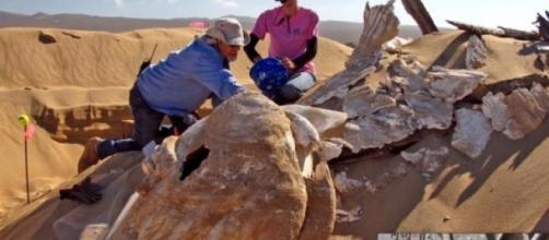 Excavación de la esfinge de Los Diez Mandamientos