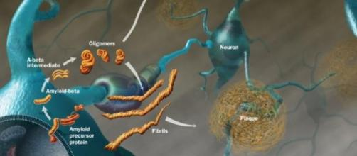 Formazione delle fibrille e delle placche amiloidi