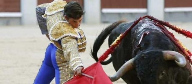 Heridas causada a un toro durante su lidia
