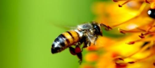 Las abejas y su acción polinizadora