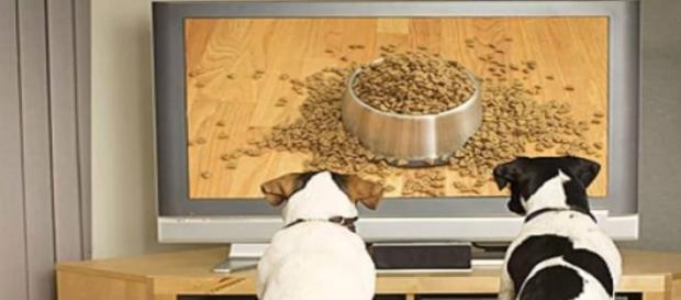 Un par de perros observando atentamente DogTV