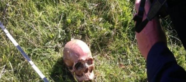 Cadavru descoperit de cainii maidanezi