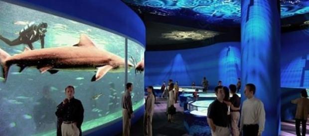 Reprodução digital do AquaRio