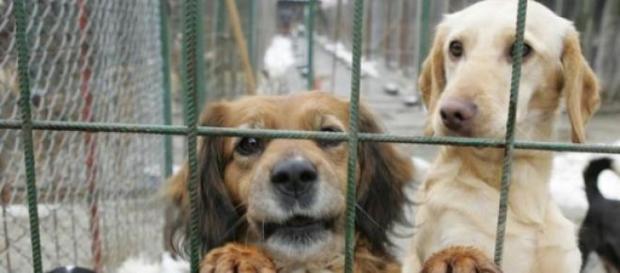 sute de mii de câini au fost măcelăriți