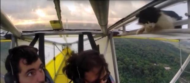 O gato agarrou-se à estrutura da asa durante o voo