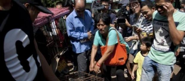 Yang Xiaoyoun cumpără câini să-i scape de moarte