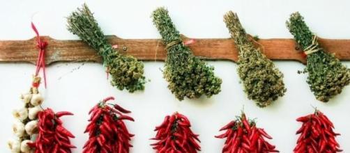 Temperos e ervas deixam a comida mais gostosa