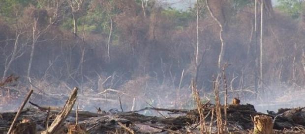 La deforestación, algo muy común en la Argentina