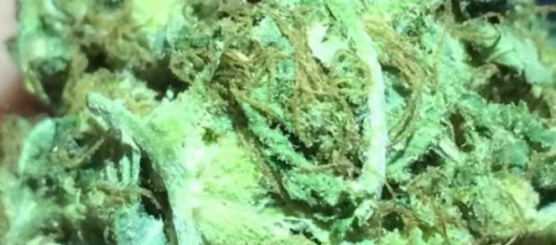 Mariguana incautada por autoridades ticas