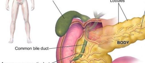 Cancro do pâncreas é detectado muito tarde.