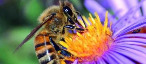 La flor acepta, la abeja sufre siniestra.
