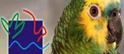 Ibama abrirá concurso público
