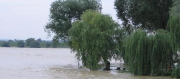 Vremea rea face ravagii în unele zone ale României