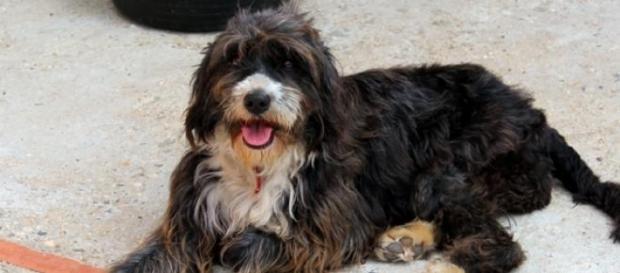 Eva, una perra en busca de familia de acogida