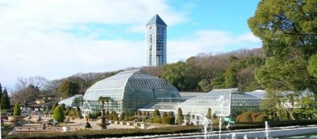 Shabani vive no zoo de Higashiyama desde 2007.