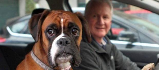 Un câine a fost uitat patru ore in portbagaj