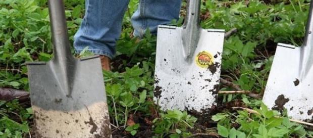 Le jardinage aide certains malades à aller mieux