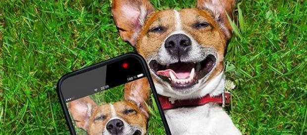 Aplicativo ajuda cães a serem adotados