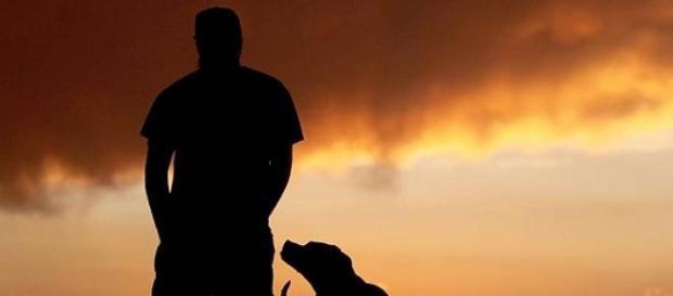 Cães são mais afetuosos aos donos