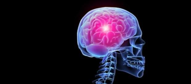 Qué hicieron las mujeres con nuestro cerebro
