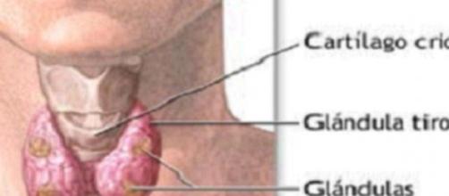 Ley de Hipoparatiroidismo