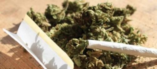 Cannabis: sarà possibile coltivarla in casa