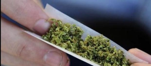 Renzi da al via alla legalizzazione della cannabis