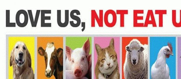 Lettera aperta a vegani e vegetariani