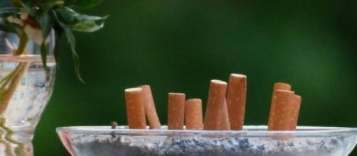 Filtri biodegradabili con semi di piante